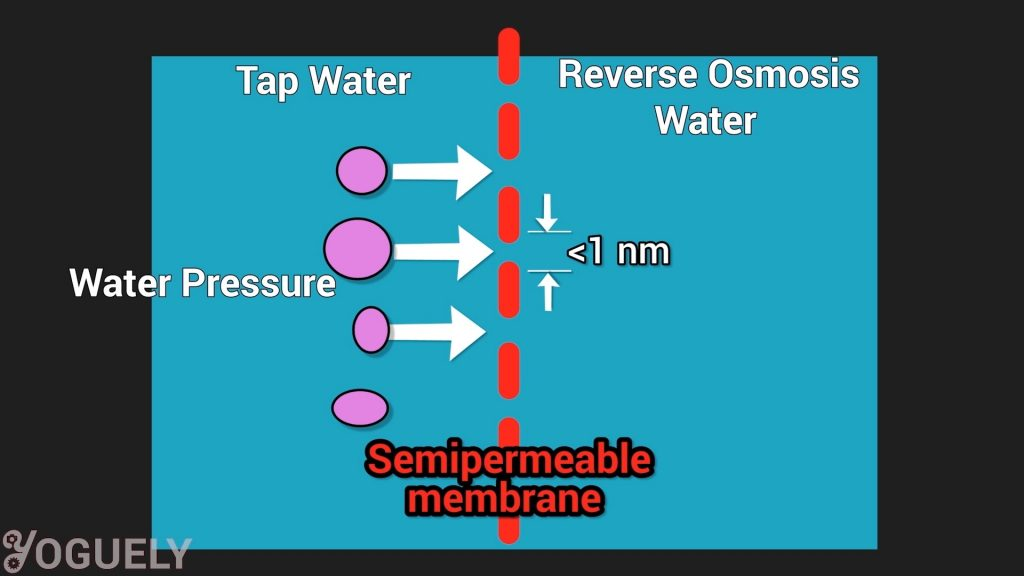 The solutes, which are the substances dissolved in the water, are too large to pass through the membrane pores. Therefore, the membrane filters them out.