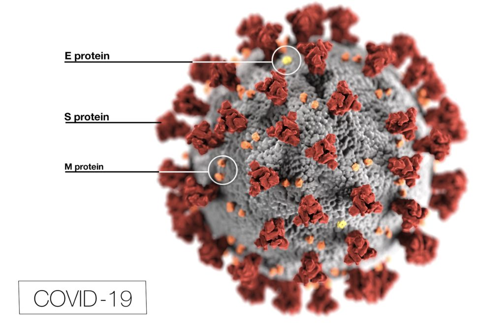 Here is why you need a safety strategy to protect yourself in this pandemic. This illustration, created at the Centers for Disease Control and Prevention (CDC), reveals ultrastructural morphology exhibited by coronaviruses. Note the spikes that adorn the outer surface of the virus, which impart the look of a corona surrounding the virion, when viewed electron microscopically. In this view, the protein particles E, S, and M, also located on the outer surface of the particle, have all been labeled as well. A novel coronavirus, named Severe Acute Respiratory Syndrome coronavirus 2 (SARS-CoV-2), was identified as the cause of an outbreak of respiratory illness first detected in Wuhan, China in 2019. The illness caused by this virus has been named coronavirus disease 2019 (COVID-19).