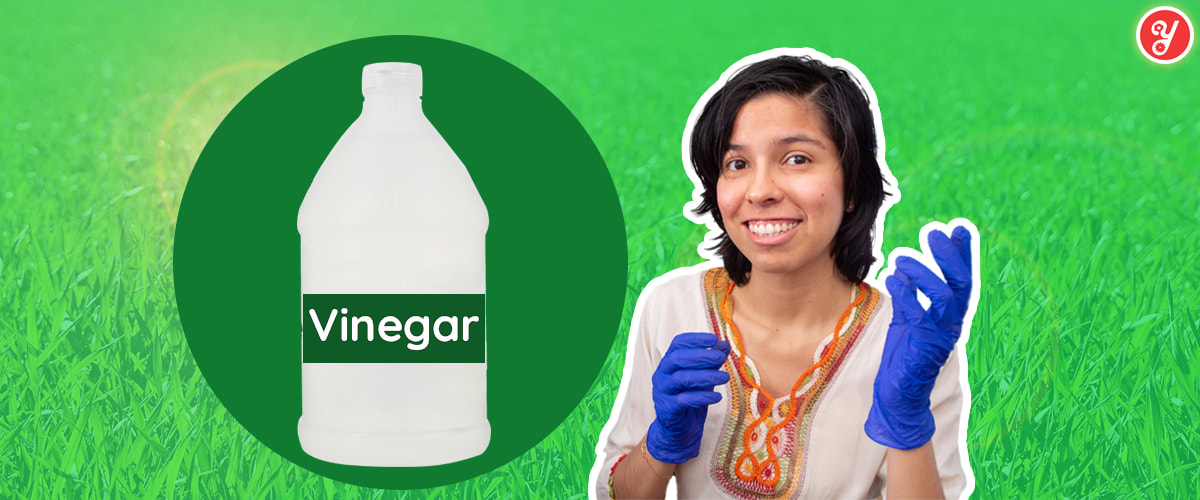 Yoguely shows you exactly how to use vinegar the right way to safely clean and even disinfect surfaces from certain microbes.